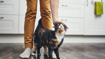 The Kane Show - Study: Are Cat People Actually Crazy?