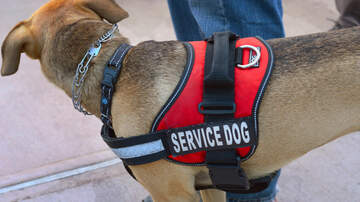 National News - Alabama Seeks to Penalize People Who Pretend They Have a Service Dog