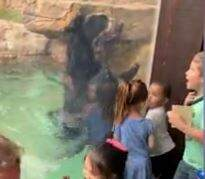 Tige and Daniel - Bear Jumps With Children At Nashville Zoo
