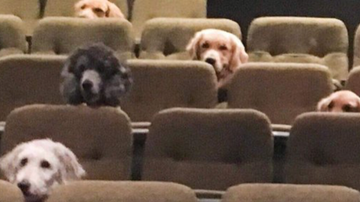 Curt Williams - Service Dogs Are Taken To A Live Theater Production As Part Of Training