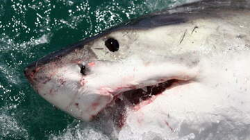 South Florida's First News w Jimmy Cefalo - Man Develops Fool Proof Way Of Knowing if Sharks Are In the Water