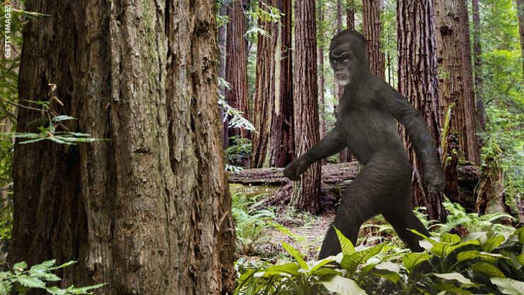 Watch: Bigfoot Filmed in Oregon?