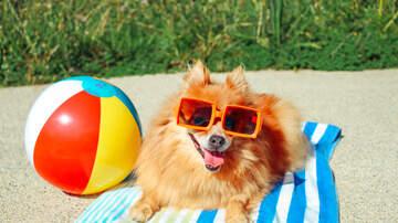 Big Mark Clark - Today is National Dog Day!  Tell Alexa to play Puppy Jams on I-Heart Radio.