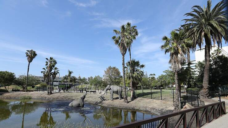 La Brea Tar Pits To Reopen Following COVID Closure