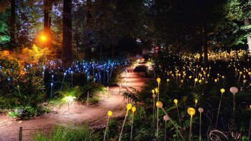 All Things Charleston - Monro's fascinating light exhibition will be at Brookgreen Gardens in 2020