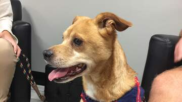 Pet of the Week - Meet Hunter, our Pet of the Week from the Humane Society of South MS