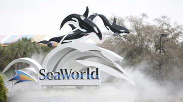 Claudia - Florida Teachers Get Unlimited Sea World Orlando Entrance