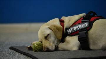 All Things Charleston - The Joy in Childhood Foundation provides MUSC with two service dogs