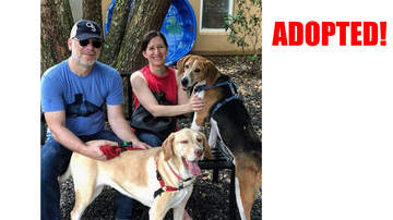 Wags with Wendy - Wags with Wendy - Sounder - Adopted!