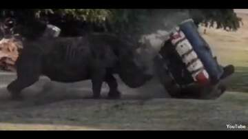 Coast to Coast AM with George Noory - Video: Rhino Flips Car Containing Zookeeper at Safari Park in Germany