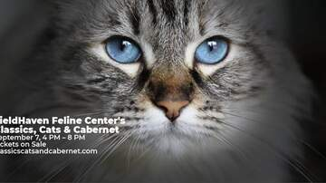 The Afternoon News with Kitty O'Neal - Classics, Cats, and Cabernet Event this Sat at Fieldhaven Feline Center