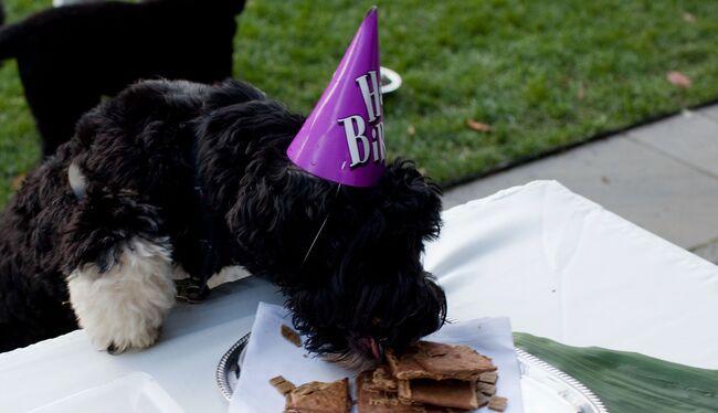 Birthday Party For Obama Family Dog Bo