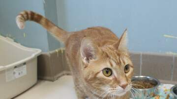 None - LCHS Pet of the Week: Bachman