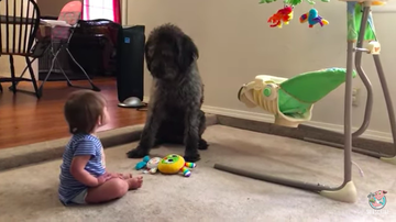 Chris Connor - *WATCH*  Pooch Teaches Toddler to Sit Pooch Teaches Toddler to Sit