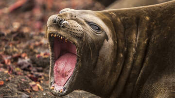 Weird News - Bellowing Seal Helps Police Nab Pair Of Drug Traffickers