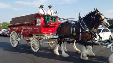 Josh Busch - A Visit With The Beautiful Budweiser Clydesdales