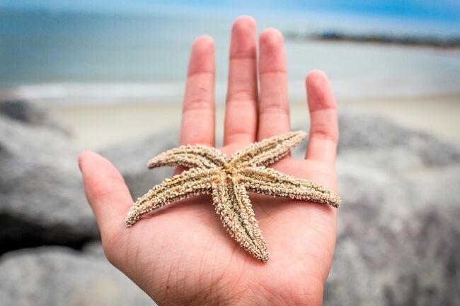 Folly Beach Star Fish
