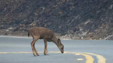 Chris Marino - 10 States Where You're Most Likely to Hit a Deer & NY is not on the list?
