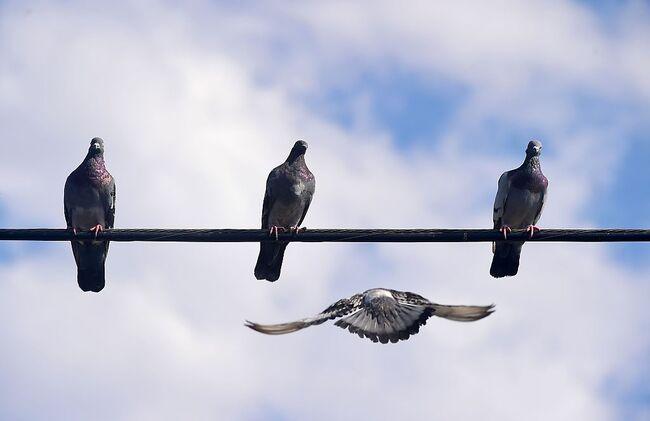 US-FEATURE-BIRDS