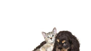 John Carrington Blog (57423) - Cat Abducts/Adopts Puppies