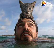 Pet Planet - This Sweet Little Kitty Likes To Swim With Dad! Seriously!