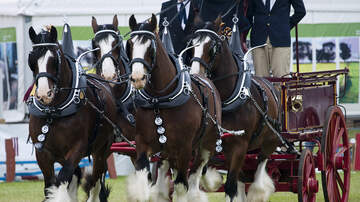 Dover International Speedway - World-Famous Budweiser Clydesdales to Appear in Fanzone