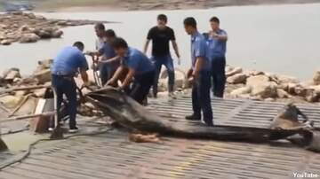 Coast to Coast AM with George Noory - Watch: China 'River Monster' Revealed?