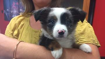 Pet of the Week - Join us for the Rock N Roll Over Event on Friday, September 20th