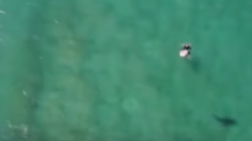 Johnjay And Rich - WATCH: Drone Used To Warn Surfer About Shark