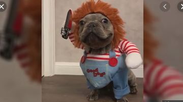 Qui West - Dog Dressed As Chucky For Halloween Goes Viral!