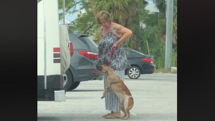 Florida woman arrested after choking dog