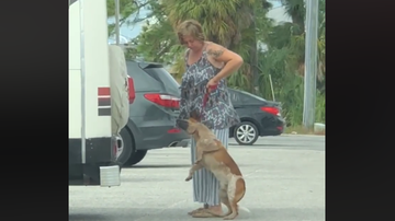 National News - Florida Woman Arrested After Viral Video Allegedly Shows Her Choking Dog