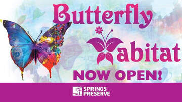 Buzzing Vegas - Butterfly Habitat Opens At Springs Preserve