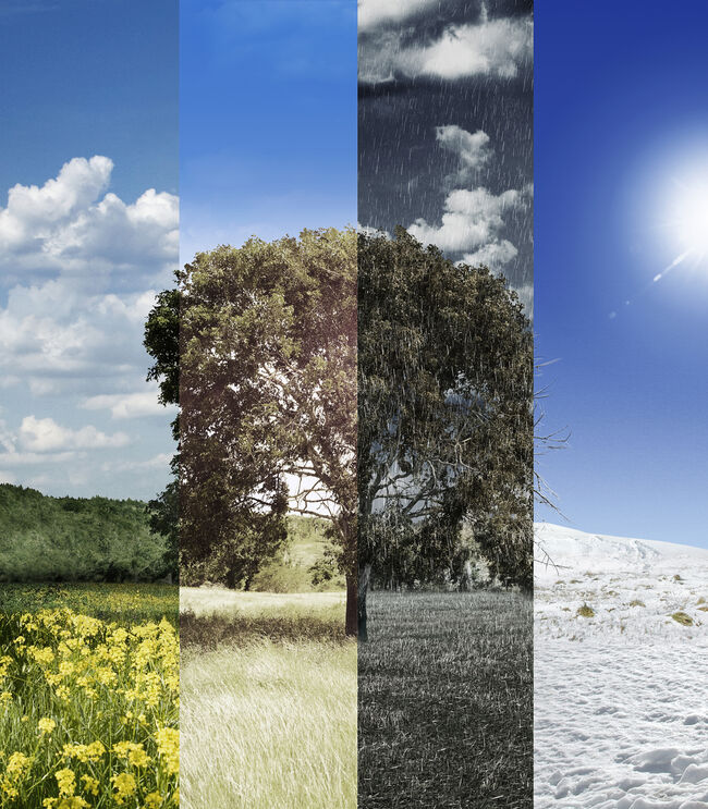 Four seasons of a tree  (Getty Images)