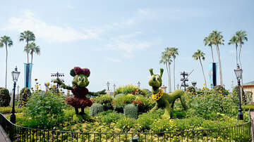 The Theme Park Podcast - Dates Unveiled For The 27th Epcot International Flower & Garden Festival