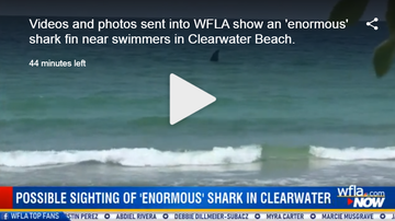 Mix Mornings with Laura Diaz - Huge Shark Spotted or Hoax in Clearwater?