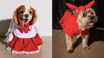 Reid - Urban Outfitters Now Has An Entire Line Of Dog Costumes For Halloween