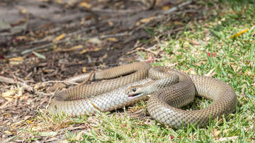 Karlson, McKenzie and Heather - Wanna Watch Jackson Fight A Snake On The Golf Course? I'll Answer: You Do!