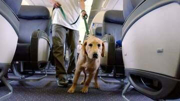 Aviation Blog - Jay Ratliff - Emotional support animals could kill you