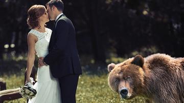 Weird, Odd and Bizarre News - Bear Crashes Wedding And Photographer Captures It All