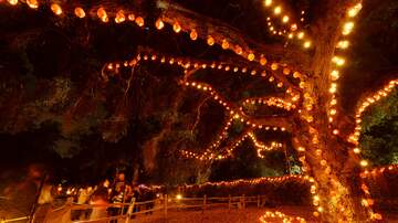 JJ - You Can Hike Through a Jack-O-Lantern Forest Here in Nashville