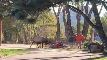 Johnjay And Rich - WATCH: Bull Elk Charges People In National Park