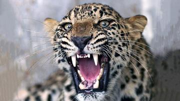 Weird, Odd and Bizarre News - Only A True Survivor Can Spot The Hidden Leopard In This Photo