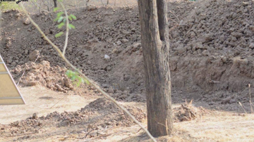 Steve Powers - Internet is buzzing with a new picture...find the leopard in this photo!
