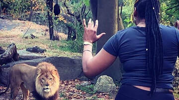 Weird News - Woman Climbs Into Lion Enclosure, Starts To Dance As Lion Stares Her Down