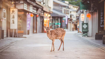 Justin - Confused Deer Gets Trapped Inside Italian Clothing Boutique