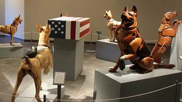 Klinger - Wounded Military Working Dog Exhibit At National Museum Of US Air Force