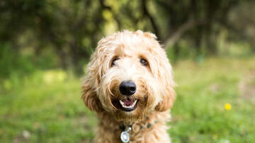 The Boxer Show - Randoms-Wanna Live Longer, Healthier?  Get a Dog; America's Favorite Veggie
