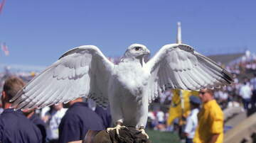 Defense - Air Force Academy's Rare Mascot Dies After Falling Ill