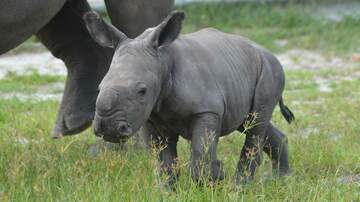 The Mo & Sally Show - Cuteness Alert! Baby Rino Born At Lion Country Safari